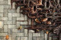 11 уникальных фото противостояния природы и человека – деревья против бетона