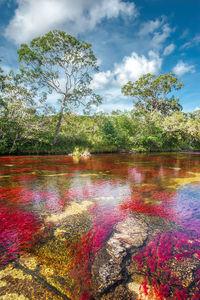 Райская радуга: 10 снимков реки Каньо-Кристалес
