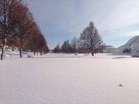 Сумасшедший снежный шторм в Буффало
