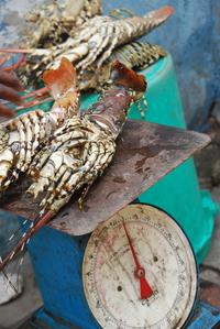 Путешествие в африканский рай — потрясающий Занзибар