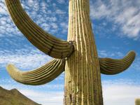 Национальный парк Сагуаро - настоящая империя кактусов