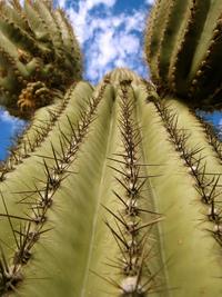 17 фото из Сагуаро – американского королевства кактусов. Ты влюбишься в это место!