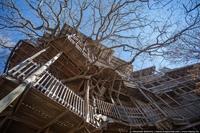 Самый высокий деревянный дом в мире
