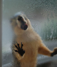 8 животных, которые лижут стекло и даже не представляют, как смешно они выглядят