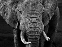 23 невероятных фото животных, от которых душа уходит в пятки