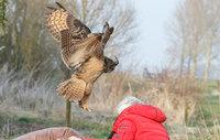 Познакомьтесь с голландской совой, которая любит приземляться людям на голову