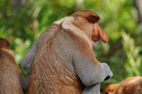 Жертвы диспропорции. 10 животных с несоразмерными частями тела