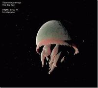 Погружение в самое неисследованное и таинственное место планеты - Марианскую впадину!