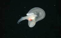 Тайны океанов. Самые жуткие и необычные обитатели глубин