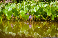 В джунглях дельты реки Ориноко