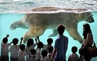 Наедине с природой: 8 лучших зоопарков мира