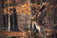 20 изумительных снимков со всего мира, доказывающих, что осень — это счастье!