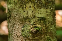 Сначала кажется, что это просто ствол дерева, но присмотрись повнимательней...