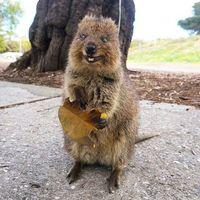 17 австралийских животных, очарование которых просто зашкаливает
