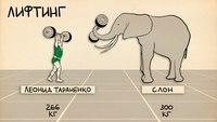 Лучшие спортсмены против представителей животного мира