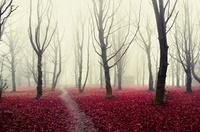 15 таинственных лесов со всего мира, которые ужасны и прекрасны одновременно