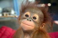 20 забавных снимков диких животных, которые умеют радоваться жизни