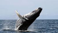ТОП-10 самых громких животных планеты