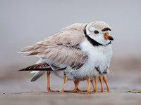 20 трогательных снимков диких птиц, которые заботятся о своих детях