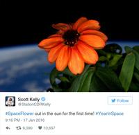 Астронавт НАСА вырастил в космосе первый в истории цветок