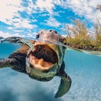 15 лучших снимков 2015 года по версии GoPro