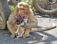 Только взгляни, о ком заботится эта обезьяна! Невероятно!