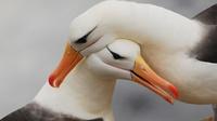 10 диких животных, которые точно знают, что такое вечная любовь