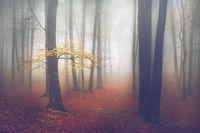 12 загадочных снимков лесов, после которых ты поймешь, что сказка реальна!