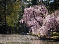 21 место в мире, которое создано для весны