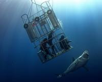 Как потрогать акулу