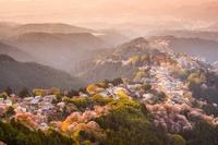 12 волшебных снимков цветения сакуры