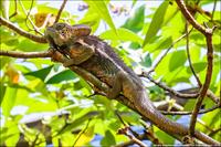 Парад хамелеонов Мадагаскара