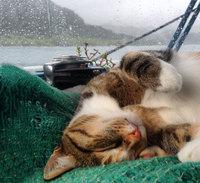 Она бросила свою работу и отправилась с котом вокруг света на парусной лодке