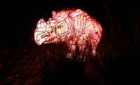 8 завораживающих снимков с фестиваля световых скульптур в Сиднее
