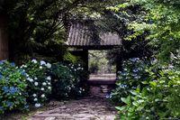 11 нереально красивых фото, сделанных в Японии в сезон дождей