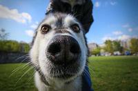 24 смешных снимка животных от парочки веселых и отчаянных путешественников