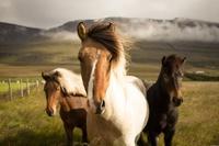 16 причин уехать жить в Исландию