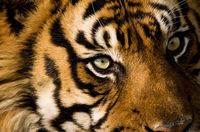 Лицом к лицу с убийцей: 21 незабываемый близкий снимок хищников