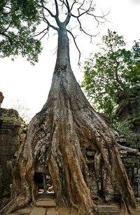 Гармония дерева и камня храма Та Пром