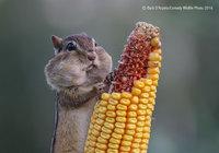 18 веселых снимков дикой природы с конкурса Comedy Wildlife Photography Awards 2016