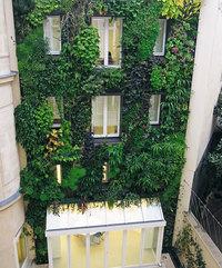 Новый французский закон позволяет любому парижанину разбивать сады в своем доме