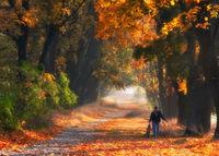 9 волшебных фото из Польши, на которых запечатлена истинная душа осени