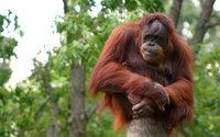 5 продуктов, из-за которых страдают дикие животные