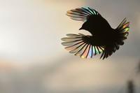24 потрясающих фото дикой природы, выставленных в лондонском Музее природы