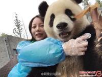 Эта гигантская панда — настоящий гуру селфи. Учись, как надо фотографировать себя!