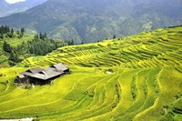 Казалось бы, всего лишь рисовые террасы, но только взгляните на эту неземную красоту!