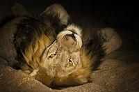 14 прекрасных и удивительных кадров о ночной жизни африканских животных