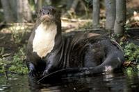 10 самых ужасающих существ Амазонки, наткнувшись на которых пожалеете, что приехали