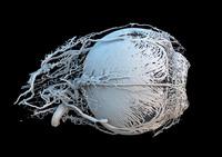 Такая фантастическая наука: победители конкурса Wellcome Image Awards 2017