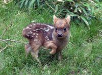 10 детенышей редких животных, которых вы не видели никогда раньше